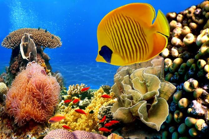 Фото: Удивительная красота подводного мира Красного Моря