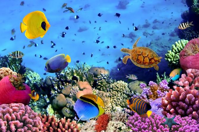 Фото: Эйлат - курорт Израиля на красном море. Подводный мир