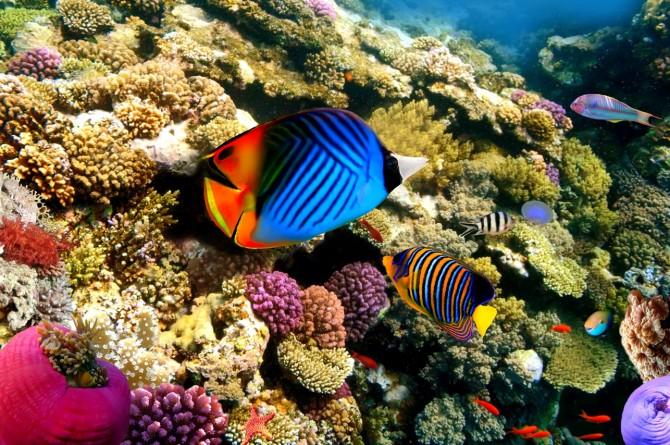 Фото: Уникальная флора и фауна Красного моря