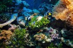 Фото: Подводный мир Красного моря в Эйлате
