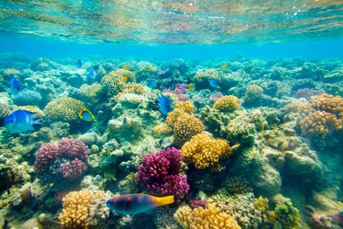 Фото: Великолепные коралловые поля Красного моря