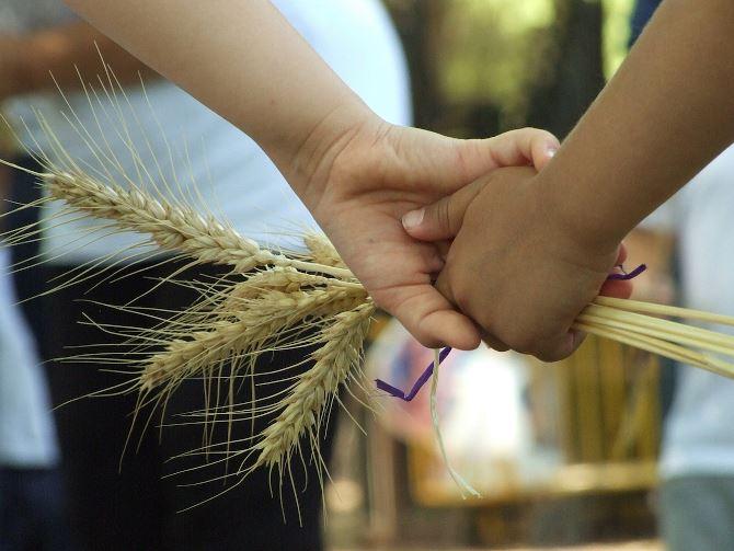 Фото: Шавуот - важный праздник в Израиле