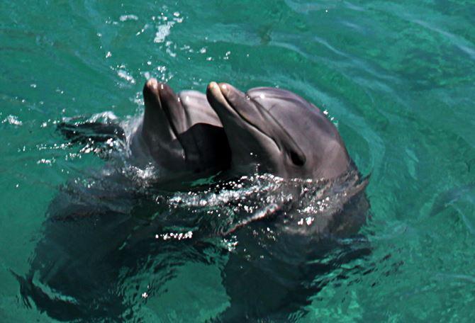 Фото: Дельфиний риф в Эйлате