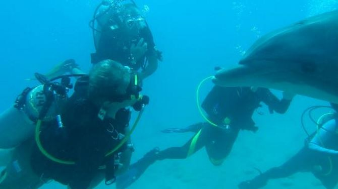 Фото: Поргужние к дельфинам с аквалангом